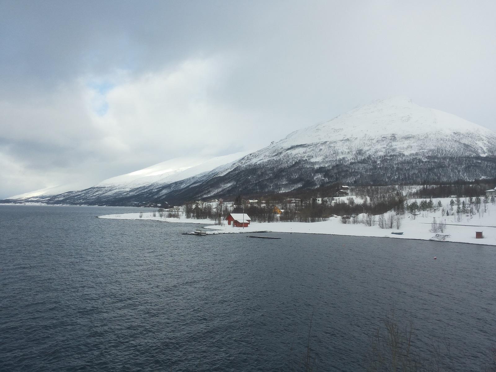 Nordmannvik1