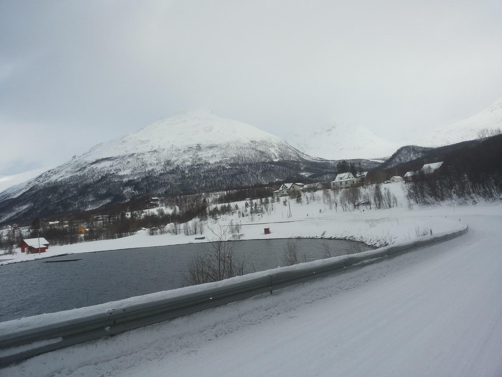 Nordmannvik3